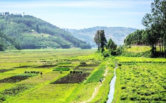 How to Perform an Online Land Ownership Search in Kenya